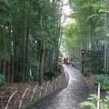 竹林の小径(2)