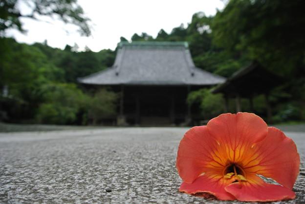 花、落ちる