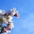 Photos: 春ッ!!