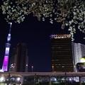 夜桜ハイライト