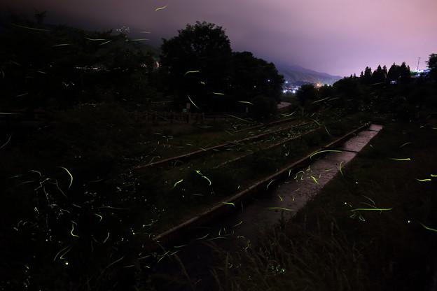 蛍舞う夜`13(辰野蛍まつり)-4