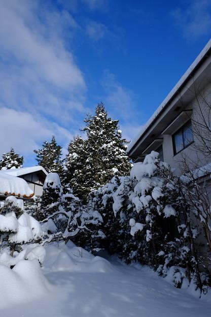 冬晴れの朝`14(二月)-5