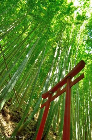 竹林に光注ぐ