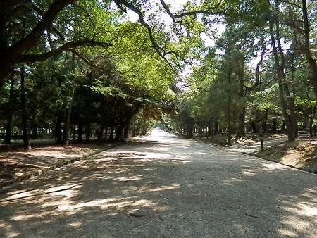 奈良公園10