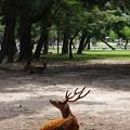 奈良公園~2013初夏~