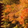 談山神社(紅葉狩り)