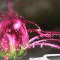 秋雨の雫5