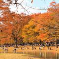 Photos: 秋を楽しむ人々