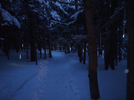 03森の中の明かり