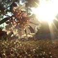 写真: 秋 夕景