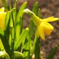 春のうたが聞こえる