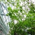 Photos: 東京国際フォーラム 新緑のある広場・・20120722