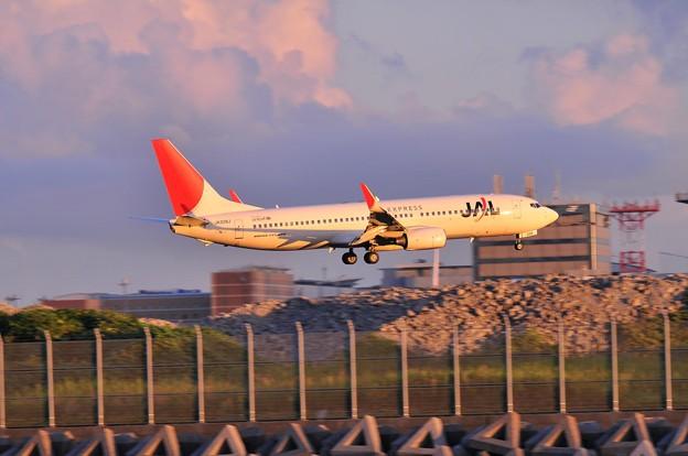夕日をあびて京浜島よりB滑走路へランディングJAL B737‐800旧塗装