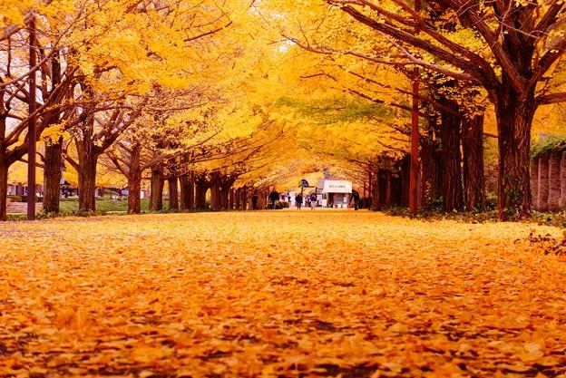 昭和 記念 公園