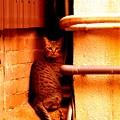 門司港の商店街路地裏の猫
