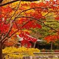 写真: 日本庭園内の紅葉も見頃?。。。昭和記念公園 20131109