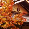 茶屋と紅葉・・昭和記念公園20131109