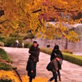 写真: 家族で落ち葉拾い・・カナール噴水イチョウ 昭和記念公園20131109