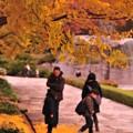 Photos: 家族で落ち葉拾い・・カナール噴水イチョウ 昭和記念公園20131109