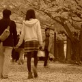 写真: 二人で歩きたくなるイチョウ並木・・昭和記念公園20131109
