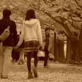 二人で歩きたくなるイチョウ並木・・昭和記念公園20131109