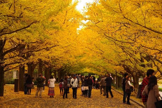 午後になって人も多く訪れて・・昭和記念公園20131109