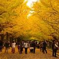 写真: 午後になって人も多く訪れて・・昭和記念公園20131109