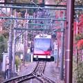 Photos: 紅葉沿いを走る箱根ケーブルカー?・・20131118