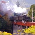 ミニチュア風の風景 大井川を渡るSL C11 190・・20131123
