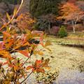 2012年鳥見山公園の紅葉-1