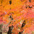 2012年鳥見山公園の紅葉-6