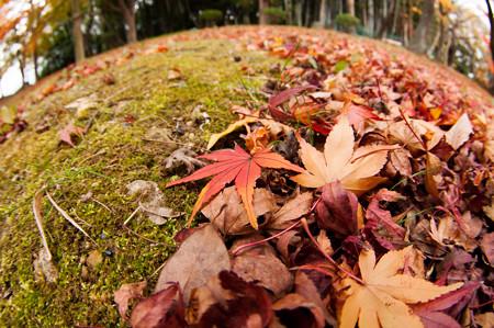 亀山公園の紅葉2012-1