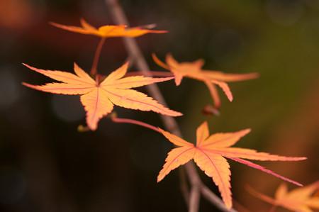 亀山公園の紅葉2012-3