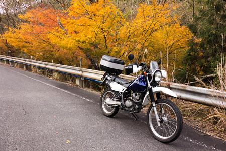 鈴鹿峠旧道の紅葉・3