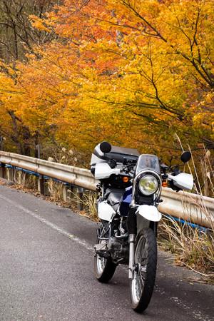 鈴鹿峠旧道の紅葉・4
