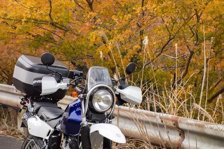 鈴鹿峠旧道の紅葉・5