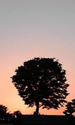 18:40 夕焼け 富士山は見えないw