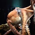 写真: 1月26日 サンシャイン水族館