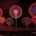 Photos: 2013酒田花火ショー 出羽の国燦々