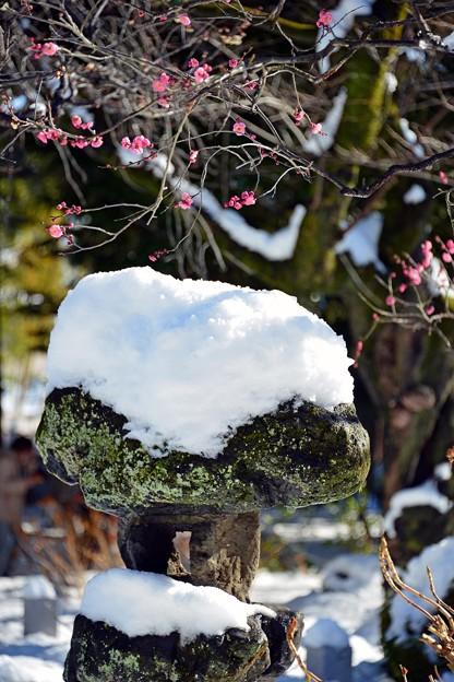 石灯籠と梅