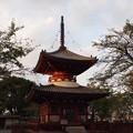 写真: 喜多院の塔