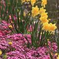 白馬村の春