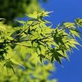 写真: 新緑の季節(再UP版)
