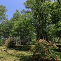 写真: 青空と緑に囲まれて・・・