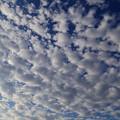 写真: 夏も終わり・・・? ~高積雲~