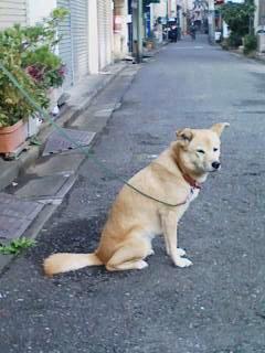 毎朝見かける犬。大変大人しい。