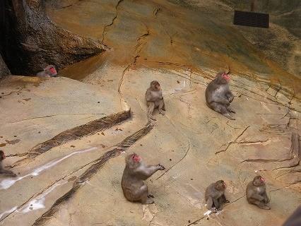 とべ動物園 ニホンザル