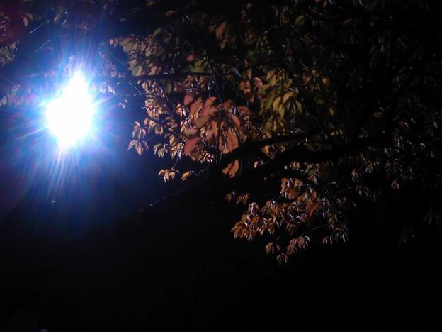 街灯の灯りに照らされて