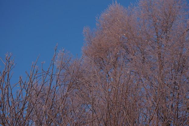 20140211 樹氷