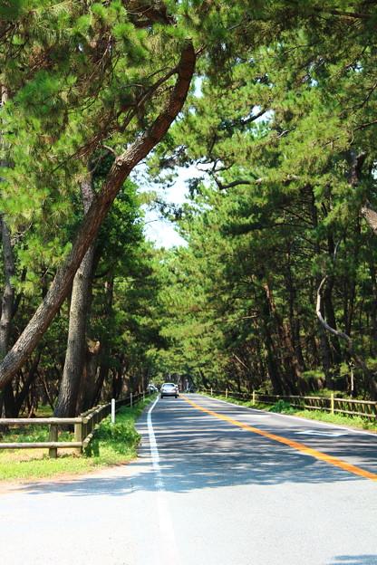 松原を縦断